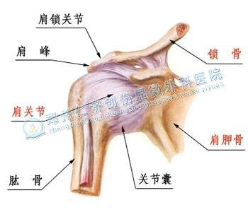 上肢骨折如何锻炼肩关节